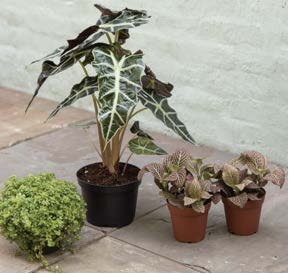 Multiple Plants One Container Gardening Activity