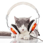 cat pet listening