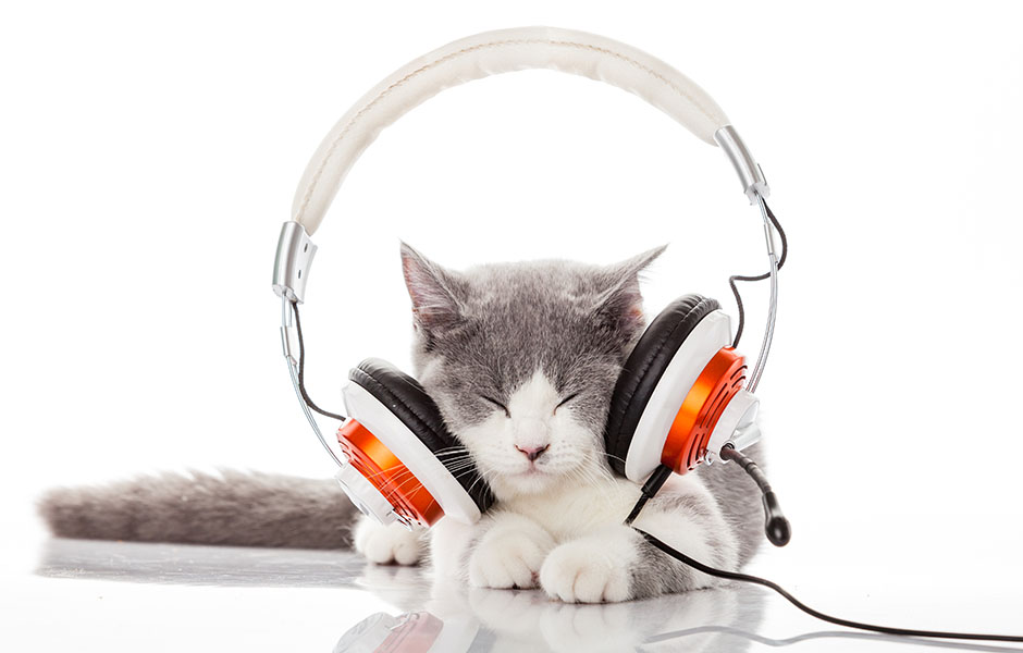 Image result for audiobooks cats