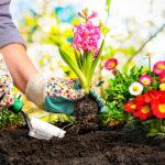 Gardening Listens