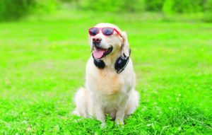 Tales (& Tails!) on Audio for National Pet Week